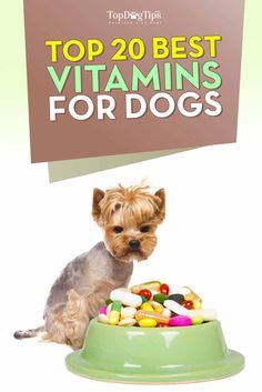 Top 20 Best Vitamins for Dogs and Why Your Dog Needs Them. Do you take a daily vitamin supplement? Have you considered giving a similar supplement to your canine companion?  The best vitamins for dogs are specifically formulated for the species to make up for any nutritional deficiencies in their diet. With canine health issues on the rise, maybe you should consider adding a daily vitamin to your dog's diet? #dogs #doghealth #dogvitamins