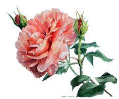 Rose Odette Henno