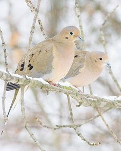 Birds in winter.