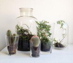 De minituin in glazen pot