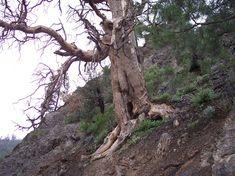 Dry Tree, Trees, Gardening, Natural, Shape, Plants, Global Warming, Trunks, Surrealism