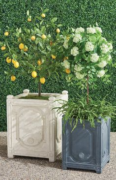 A traditional design on a grand scale, our graciously sized Chantal Planter offers ample planting space for topiaries or floral arrangements. Crafted from crushed stone and resin to give the appearance of handcarved, whitewashed stone.