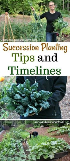 Vegetable Gardening Tips Vegetable Gardening Tips are Necessary
