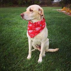Just waiting around for puck drop. #LGRW #hockeytime #labs #lovethatboy #lovethatdog #drw #yellowdog #detroitredwings #nhl @detroitredwings #redwings