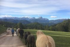 Ride and Relax in the Italian Dolomites. Horse riding holiday, Italy. www.stable-mates.com