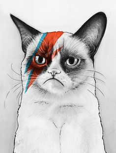 Grumpy Cat as Bowie, David NOie by Olechka