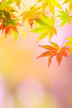 #Japan autumn leaves Fall Wallpaper, Tumblr Wallpaper, Water Flowers, Yellow Flowers, Autumn Leaves Japan, Rain Photography, Autumn Scenery, Miguel Angel, Tree Forest
