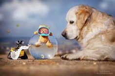 A fotógrafa Gabi Stickler tem registrado há anos seu cachorro Mali, da raça Golden Retriever.Em uma grande extensão de imagens perfeitas, a amizade entre o pet e seu amigo, um ursinho de pelúcia chamado Teddy, surpreendeu e rendeu um ensaio fotográfico com imagens simplesmente belíssimas. A atmosfera realmente tem uma magia interessante e Teddy sem dúvida ganha vida na série.Foto: Reprodução Facebook