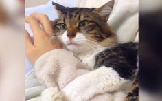 「行かないで~!」腕に抱きつく猫ちゃん、飼い主さんが離れようとすると… – grape [グレープ] – 心に響く動画メディア