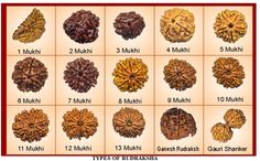Rudraksha (Botanical name: Elaeocarpus ganitrus) is a large evergreen broad-leaved tree whose seed is #traditionally used for prayer beads in Hinduism.