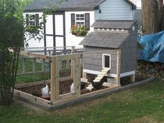 Chicken House Plans: 3 Top Tips For Building Chicken Coops