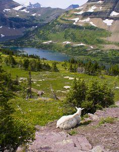 Hidden Lake, Glacier National Park, Montana Copyright: Terry Sorenson