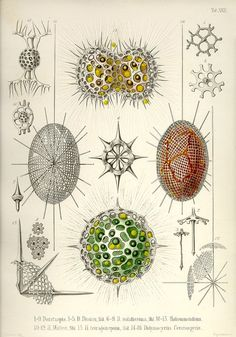 Proteus details the biography and struggles of biologist and artist Ernst Haeckel (1834-1919)