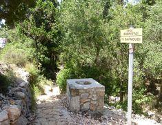 Ποιό δάσος στην Κεφαλονιά σε οδηγεί σε μια μοναδική παραλία?? | kefaloniapress.gr
