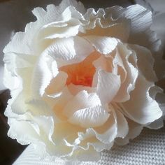 Trying to imitate the spell of a cream peony