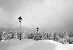 Erzgebirge trees © Tesa de Buru Erzgebirge 2013