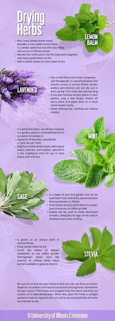 How to cut herbs for drying and some common uses.