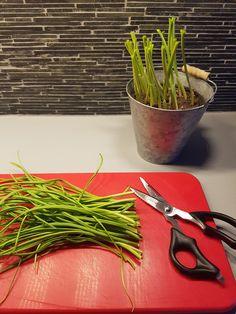 Den herlige grønne hvitløken i kjøkkenvinduet er super å tørke som andre urter Planter Pots, Herbs, Food, Herb, Meals, Yemek, Plant Pots, Eten