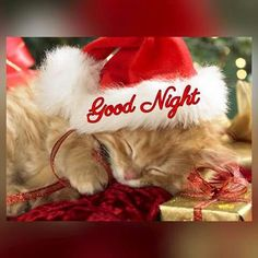 Good Night sister and all.Have a blessed Sleep. Cute Good Morning Gif, Good Night Meme, Good Night To You, Good Night Sweet Dreams, Good Night Quotes, Good Morning Christmas, Merry Christmas Gif, Christmas Kitten, Christmas Time