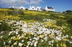 Springflowers at Abalone House Boutique Guest House, Paternoster