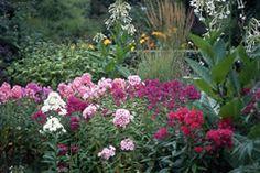 Schattenpflanzen - Pflanzen für schattige Standorte und den Schattengarten SCHATTEN