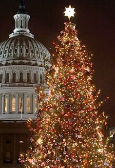 The Capitol Christmas tree in Washington, D.C., is decorated with 3,000 ornaments that are the handiwork of U.S. schoolchildren. Encircling evergreens in the 'Pathway of Peace' represent the 50 U.S. states.
