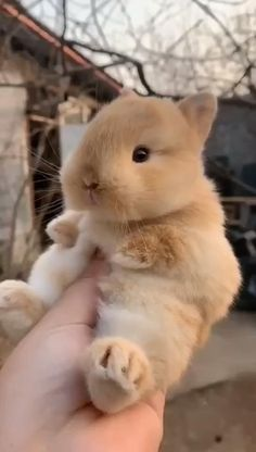 Let me take you to find the cute pets around you Cute Animal Memes, Cute Animal Videos, Cute Funny Animals, Cute Cats, Baby Animals Pictures, Animals And Pets, Cute Baby Bunnies, Tiny Bunny, Bunny Rabbit