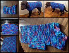 6 photos showing the dog sweater in progress and when complete and being modeled by my dark brown chocolate Lab. The sweater is made of yarn with various shades blue, red, purple, and green Crochet Dog Sweater Free Pattern, Dog Pattern, Sweater Knitting Patterns, Crochet Blanket Patterns, Free Crochet, Dog Crochet, Irish Crochet, Large Dog Sweaters, Cat Sweaters