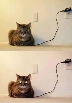 How to tell if your cat is fully charged...yep...all good...