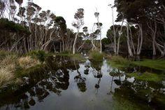 Tarkine, Tasmania.