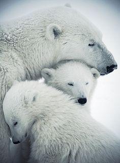 RosamariaGFrangini | NatureAnimalBears | All Things White