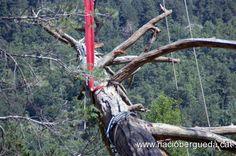 Recol·locació de la branca tallada al Pi de les Tres Branques - Foto 12 de 25 | Galeria de fotos | Nació Berguedà