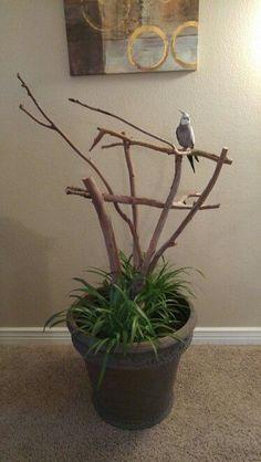 Pet Bird Stuff... DIY Bird Perch Stand