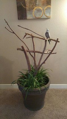 DIY Bird Perch Stand
