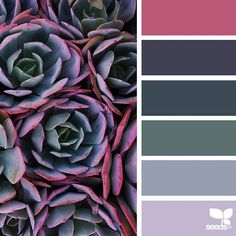 today's inspiration image for { succulent hues } is by @traceylbolton ... thank you, Tracey, for another amazing #SeedsColor image share!