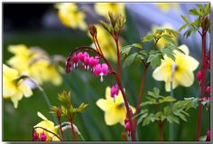Gorgeous spring photos from Webshots!