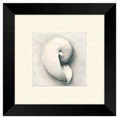 Nautilus Shell Framed Wall Art ==