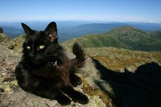 Marty, the summit cat at Mount Washington Observatory, enjoys the view!