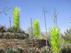 Chihuly glass sculpture reflects the landscape at the Desert Botanical Garden in Phoenix, Arizona.