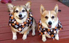 Fall fido fun! #cute #dogs during the #fall season ! #woof!
