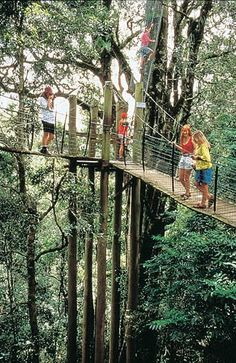 Tree Top Walk, O'Reilly's & Lamington National Park Brisbane Qld. Australia