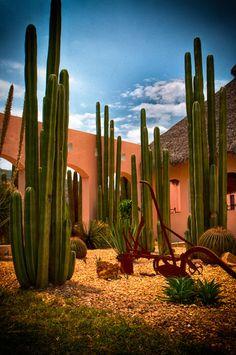 Desert Garden (Jardin desertico) by José Manuel Cajigal Cacti And Succulents, Planting Succulents, Cacti Garden, Landscape Design, Garden Design, Desert Landscape, Arizona Gardening, Cactus Plante, Agaves