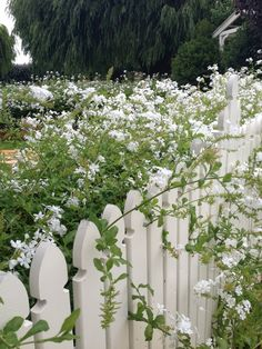 Flowers on a picket fence