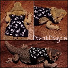Custom harness for bearded dragon http://www.desertdragonsok.com/custom-dragon-harnesses