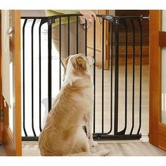 Tall and Wide Metal Pet Barrier Gate. Solid Steel Construction suitable for doorways and extra wide expanses.