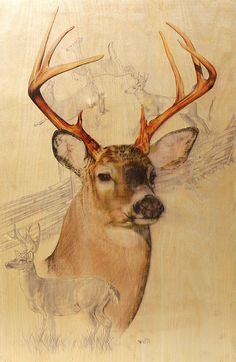 White-Tailed Deer wall art --I plan on having some of my brother's old drawings framed as soon as he signs them. :)