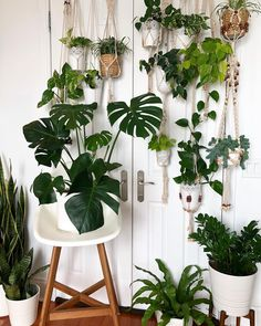 "@earthisparadise_ on Instagram: ""Jungle vibe Mini plant family portrait:) I wish I had a big white wall to fit everyone in for a…"""