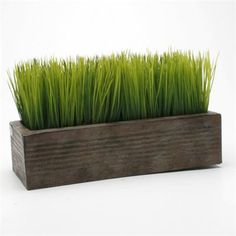 Wheatgrass such an easy plant, for indoors and cheap. New home is going to have a pot in each room