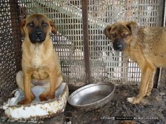 Site with tons of petitions to stop dog and cat meat markets. Please take a look and sign as many as you can!