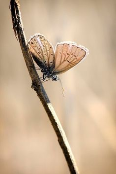 ^Butterfly - by Ali Aslan Glitzy Glam, Let Your Hair Down, Soft Autumn, Shades Of Beige, Perfect World, Autumn Garden, Black And White Pictures, Butterfly Wings, Beautiful Butterflies